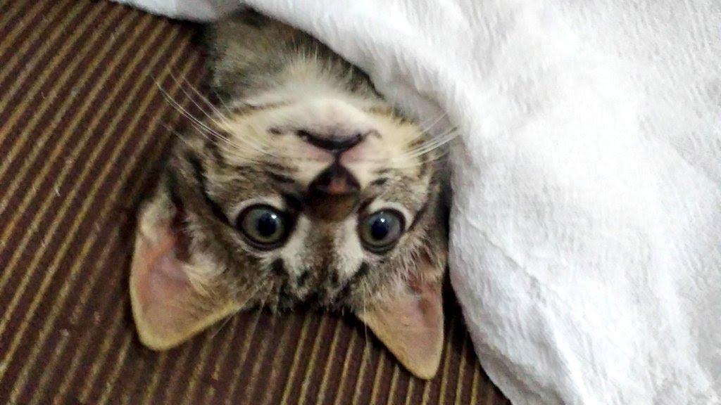 Kojima, meu gatinho.