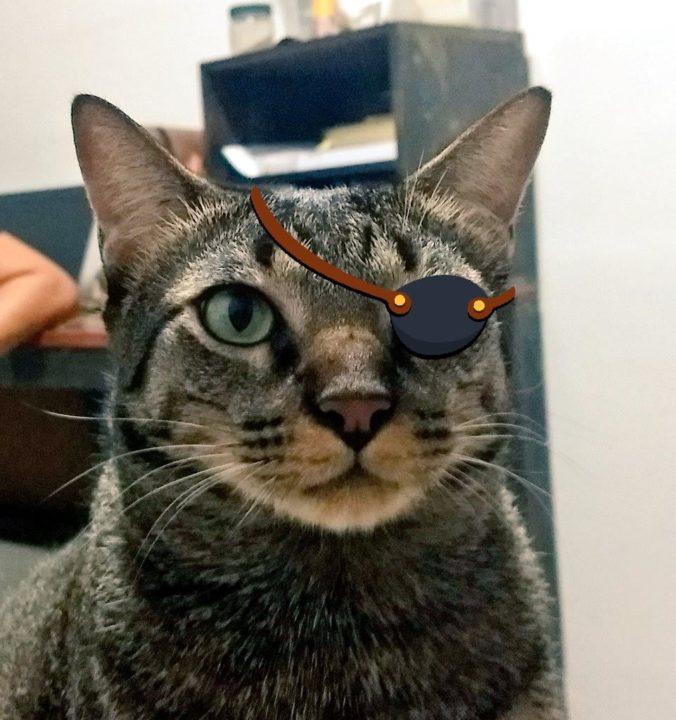Kojima, meu gato, usando tapa-olho
