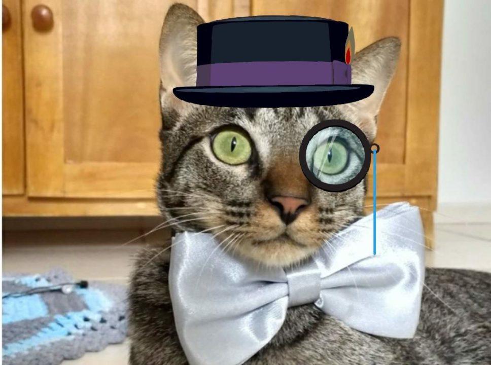 Kojima, o meu gato, usando gravata borboleta